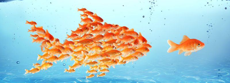 fish-leadership-1080x390.jpg